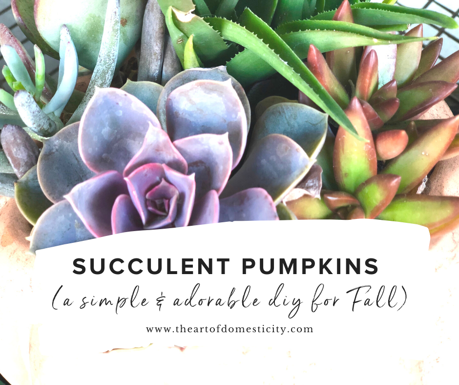 Pumpkin succulents are an adorable addition to your Fall decor and they are so simple! Just a few easy steps and you will have a super cute addition to your home.